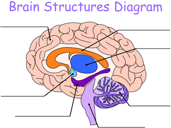 Brain Puzzles and Worksheets